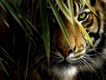 harimau-mata